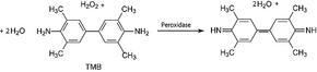 Structure of Tetramethylbenzidine CAS 54827-17-7