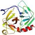Structure of Chymotrypsin EC 3.4.21.1 CAS 9004-07-3