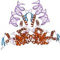 Structure of RNase III CAS UENA-0194
