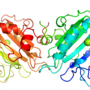 Structure of UltraNuclease CAS 9025-65-4