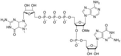 Structure of m7GpppNm CAS UENA-0197